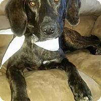 Adopt A Pet :: Rugar - Ogden, UT