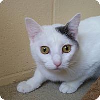 Adopt A Pet :: Cricket - Chula Vista, CA