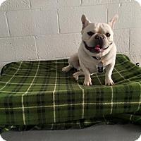 Adopt A Pet :: Vito - Las Vegas, NV