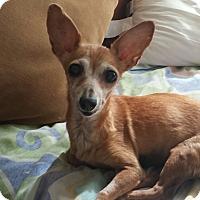 Adopt A Pet :: Loretta Lynn - Wallingford Area, CT