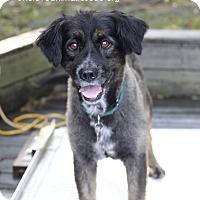 Adopt A Pet :: Oso - Mount Laurel, NJ