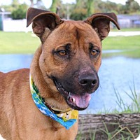 Terrier (Unknown Type, Small)/Shepherd (Unknown Type) Mix Dog for adoption in Loxahatchee, Florida - Scooby Doo