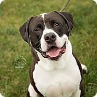 Adopt A Pet :: Gus - Urgent! - Zanesville, OH