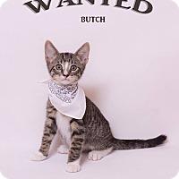 Adopt A Pet :: Butch Cassidy - Riverside, CA