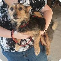 Adopt A Pet :: Piper - Ruston, LA