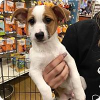 Adopt A Pet :: Axel - Sugar Grove, IL