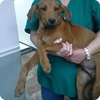 Adopt A Pet :: Leonard meet me 10/28 - Manchester, CT