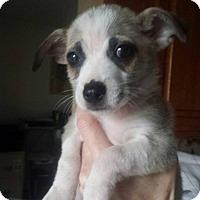 Adopt A Pet :: Stanley - joliet, IL
