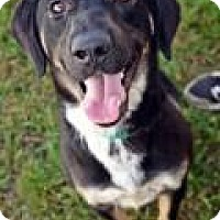 Adopt A Pet :: Tommy - Fort Smith, AR