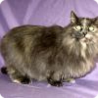 Adopt A Pet :: Rhonnie - Powell, OH
