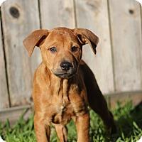 Adopt A Pet :: Faith - Humble, TX