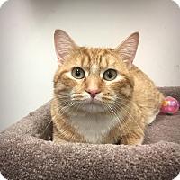 Adopt A Pet :: Archie (@ Woodbury Petsmart) - Roseville, MN