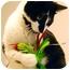 Photo 2 - Domestic Shorthair Cat for adoption in Encinitas, California - Edie
