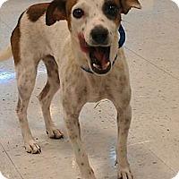 Adopt A Pet :: Deidre - Phoenix, AZ