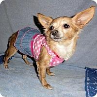 Adopt A Pet :: Gracie - Mooy, AL