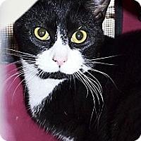 Adopt A Pet :: Whitney - Xenia, OH