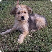 Adopt A Pet :: Keon - Adamsville, TN