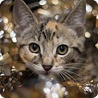 Adopt A Pet :: Erin - Sacramento, CA