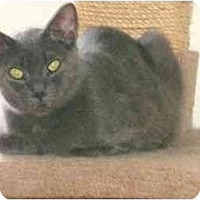 Adopt A Pet :: Angel - Etobicoke, ON