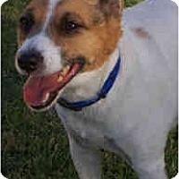 Adopt A Pet :: DJ - Phoenix, AZ