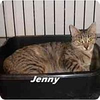 Adopt A Pet :: Ginni - Jacksonville, FL