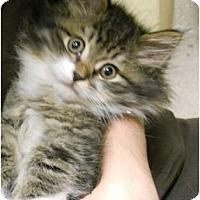Adopt A Pet :: Marybeth - Maywood, NJ