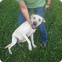Adopt A Pet :: #327-14  ADOPTED! - Zanesville, OH
