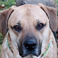 Adopt A Pet :: Rocky - SOUTHINGTON, CT
