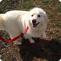 Adopt A Pet :: Gracie aka Murphy - Huntsville, AL