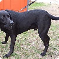Adopt A Pet :: Duke - Franklin, NH