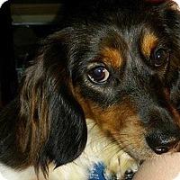 Adopt A Pet :: Daisy - Marcellus, MI