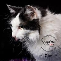Adopt A Pet :: Dillia - St. Charles, IL