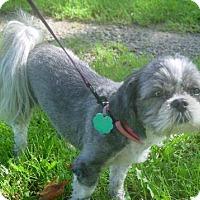 Adopt A Pet :: Ellie Mae - Davison, MI