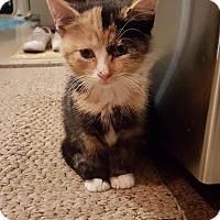 Adopt A Pet :: Ana - East Brunswick, NJ