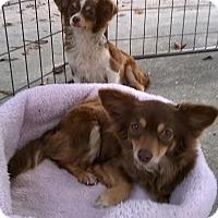 Adopt A Pet :: Sugar & Spice - Daleville, AL
