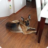 Adopt A Pet :: Mugz - Miami, FL