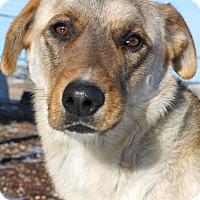 Adopt A Pet :: Silver - Buffalo, WY