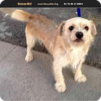 Adopt A Pet :: Kirby - Phoenix, AZ