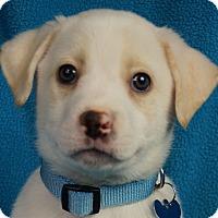 Adopt A Pet :: Marco - Minneapolis, MN