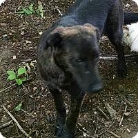 Adopt A Pet :: Tootsie - Greensboro, GA