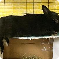 Adopt A Pet :: Oliver - Woburn, MA