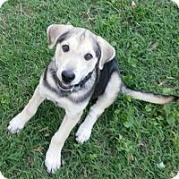 Adopt A Pet :: Lancelot - Richmond, VA