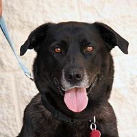 Adopt A Pet :: Lizzie - Palmdale, CA