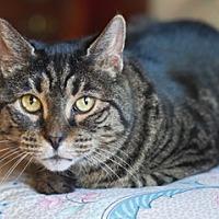 Adopt A Pet :: Fancy - Great Falls, MT