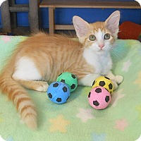 Adopt A Pet :: Clive - Glendale, AZ