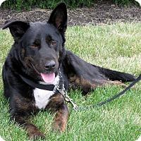 German Shepherd Dog Mix Dog for adoption in Overland Park, Kansas - A070574 Duke