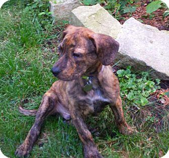 FAIRBANKS | Adopted Pu...
