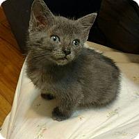Adopt A Pet :: Anastasia - Texarkana, AR
