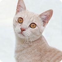 Adopt A Pet :: Tabatha - Encinitas, CA