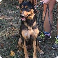 Adopt A Pet :: Mimi - Groton, MA